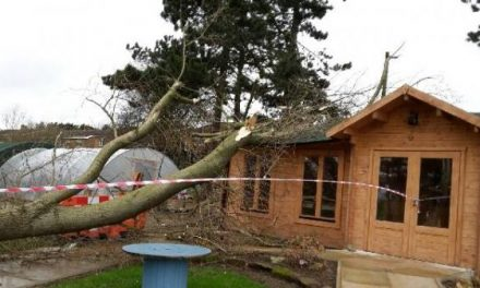 Local Food funded log cabin significantly damaged!